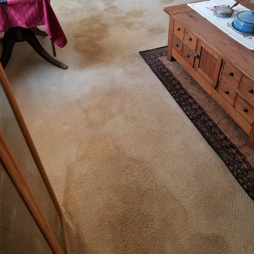 Carpet Cleaning Stain Removal (Before)
